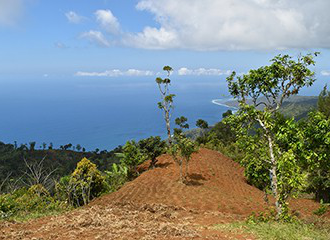 On the volcanic Indian Ocean island of Anjouan, a cultivated field overlooks the ocean.